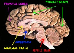 Your Three Part Brain And How To Make Use Of It