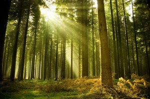 The Forest, The Trees, And Covert Hypnosis